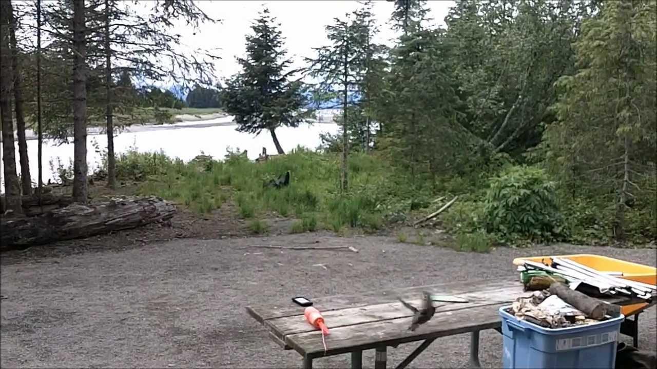 Saay Creek Cabin In Juneau Alaska