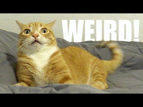 My Cat is Weird