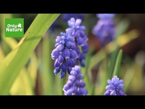 Gregory Porter - Revival (Official Music Video)Kaynak: YouTube · Süre: 3 dakika23 saniye
