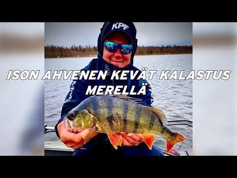 youtube ahvenen kalastus
