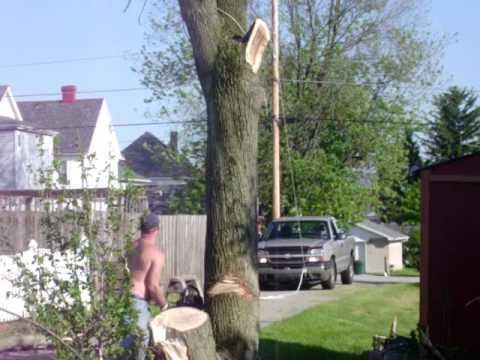Tree Falls On Truck