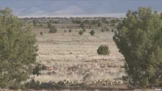 Arizona Lion Hunt and Coyote Contest Longshot