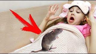 Пранк над братом Крыса у нас дома