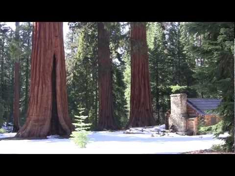 Sequoia Flute Music Meditation by Todd Boston - Music in the Wild
