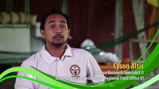 Ang Matagumpay na Native Chicken Industry sa Region 6