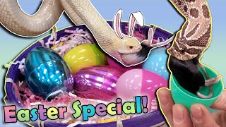 Our Reptiles go on an Easter Egg Hunt!