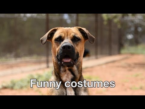 Happy Valentines Day from The Love Dogtor Tip #7 - Funny Costumes