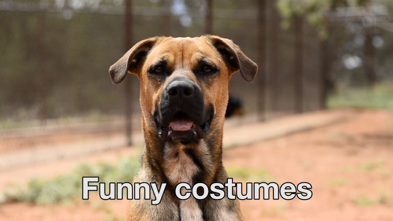 Happy Valentines Day from The Love Dogtor Tip #7 - Funny Costumes #1