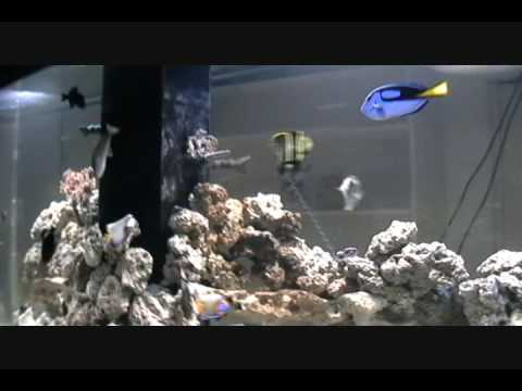 Our 750 Gallon Saltwater Aquarium Fish Tank Youtube