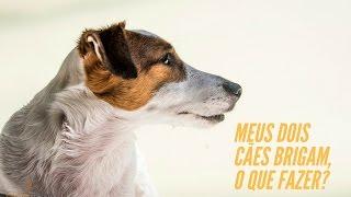 Pergunta do dia #12 | 2 Cães da mesma casa brigam feio, o que fazer?