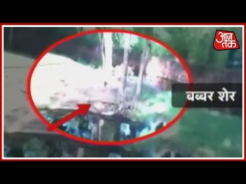 Vishesh: Drunk Man Escapes Unhurt From Lion Enclosure In Hyderabad Zoo