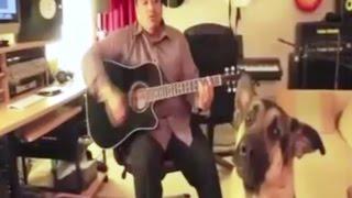 Поющие собаки  Улётное видео