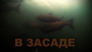 Подводная охота в лёжке. Толстолобик. Охота на просвет..
