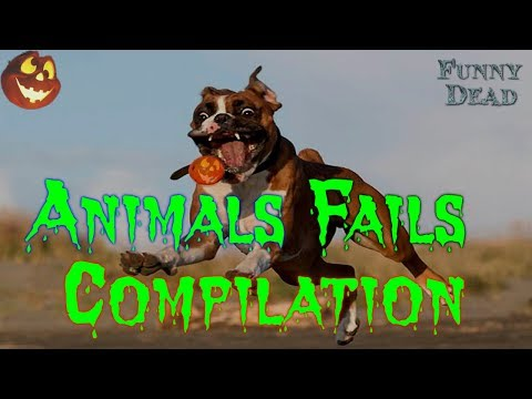 Animal Fail Compilation - Dogs vs Cats 2019 Funny