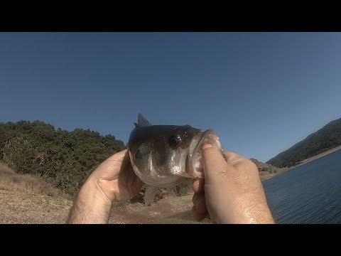 Catching Bass - Uvas And Coyote Creek In Morgan Hill
