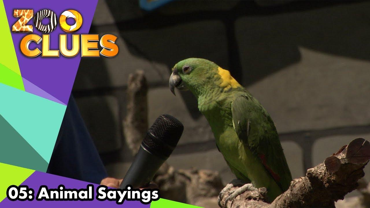 Download Zoo Clues | Season 1 | Episode 5 | Animal Sayings | Bill Lloyd