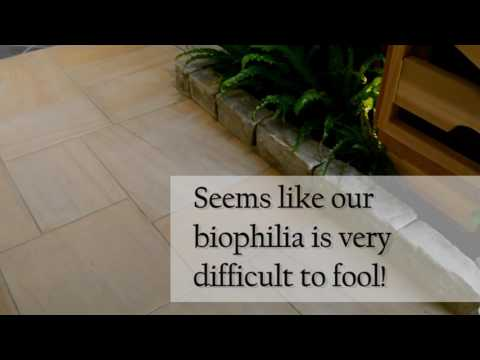 Biophilic Design Applications: Psychological and Physiological Health and Well-being