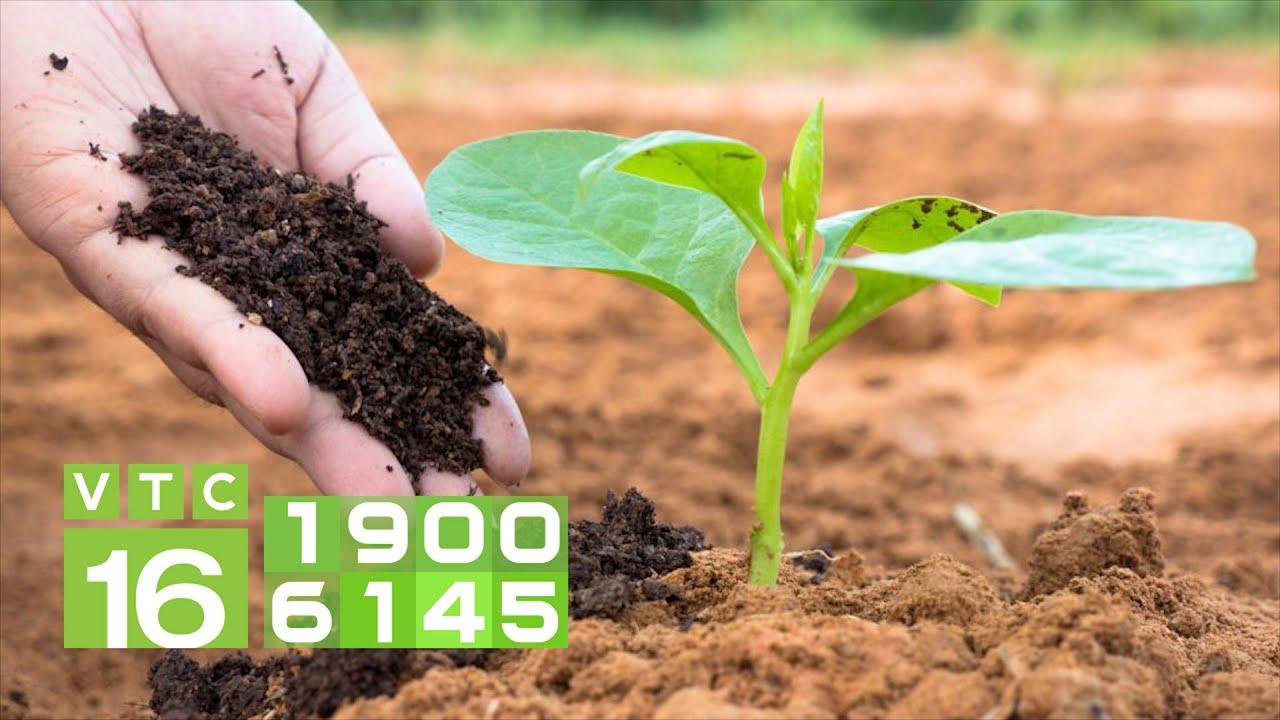 Phân bón hữu cơ vi sinh: Cứu cánh cho nhà nông   VTC16