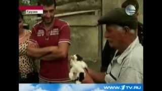 Кошка родила щенка это нужно видеть! новости! как так? смотреть всем видео котопес мутант пес