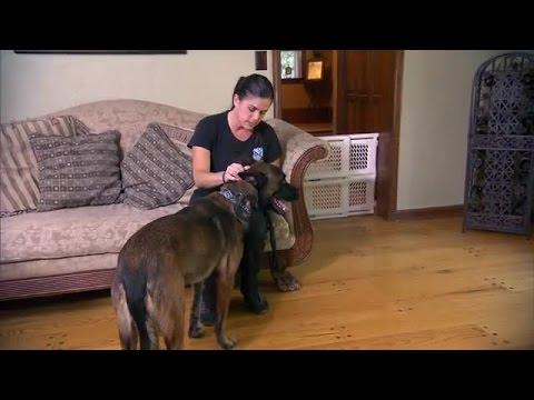 dog whisperer season 7 episode 7