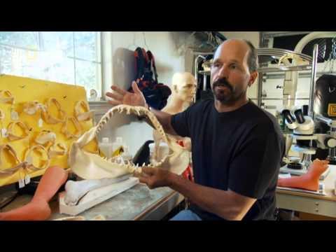 Челюсти в Красном море (Red Sea Jaws)