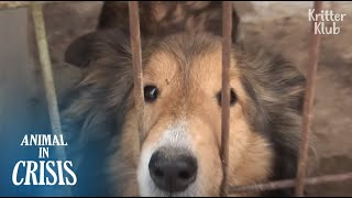 While You're Asleep, One More Dog Went To Heaven Yesterday.. | Animal in Crisis EP162