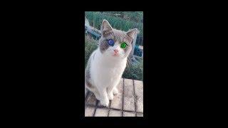 【Tik Tok】Top 20 Funny Cat Videos / Funny Cats 2019 / Ep6