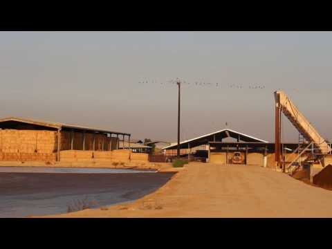 Martins Bros Dairy Farms -  California 2016