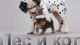 Пес и кот: лучшие друзья!