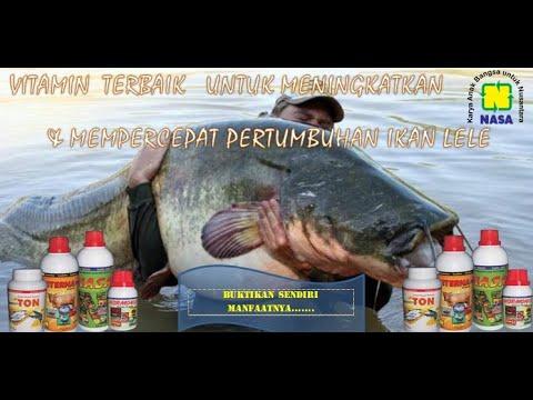 vitamin-untuk-ikan-lele