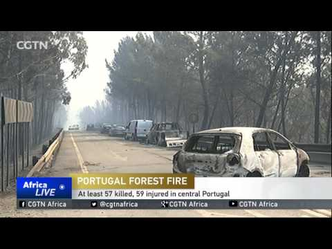 Portugal Forest Fire: At least 57 killed, 59 injured in central Portugal
