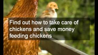 How To Start A Chicken Farm | Tips On Poultry Farming, Composting & How To Start A Chicken Farm
