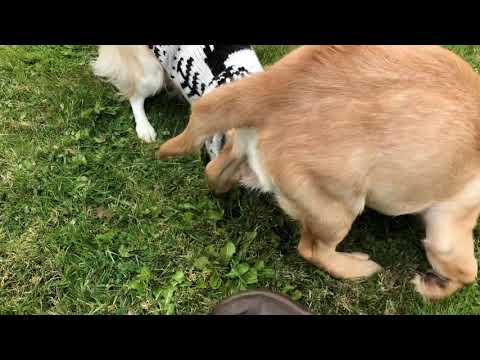Blind Dogs Have  Fun Too