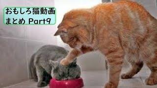 かわいくて面白い猫のまとめ動画Part9! チャンネル登録・高評価お願い...