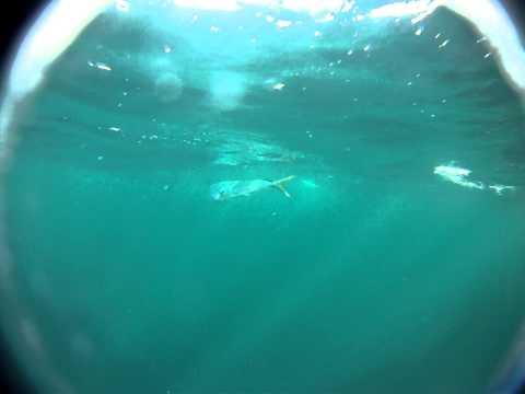 Mahi's offshore of Angola