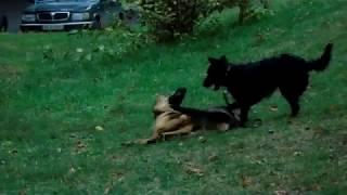 НАША СОБАКА Рекс прогулка на улице видео для детей про собачек