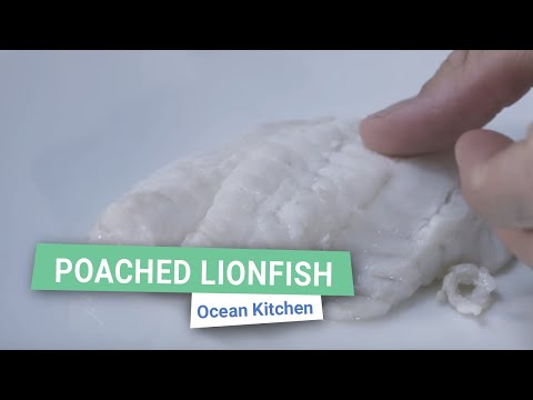 How to Poach Lionfish (or any White Fish) | Ocean Kitchen