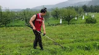 ♡21스타농부가 돌아왔어요  # 들깨  # 자연순환농법…