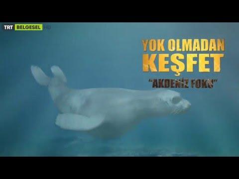 Yok Olmadan Keşfet - Akdeniz Foku / 11. Bölüm Fragman - TRT Belgesel