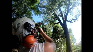 How to get a rope in a tree!