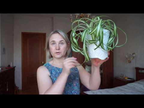 Очень полезные растения для офиса.