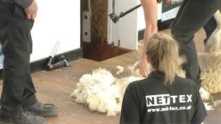 Ffeinal Cneifio i Ferched | Womens Shearing Final