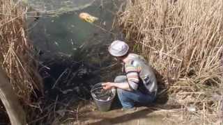Запускаем малька рыбы на озере Великих Копанях!(Запустили 200кг малька,карп,зеркальный карп,белый амур,толстолоб,окунь!!!, 2013-04-05T20:58:26.000Z)