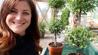 Garden Maintenance Day Part 2! 🌿💚// Garden Answer