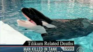 Deadly Attack at Sea World