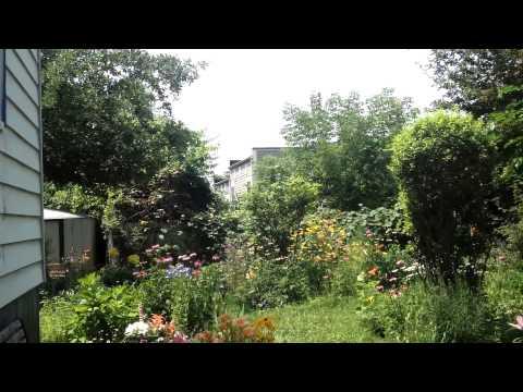 Organic Asian garden in America, 08-2015.