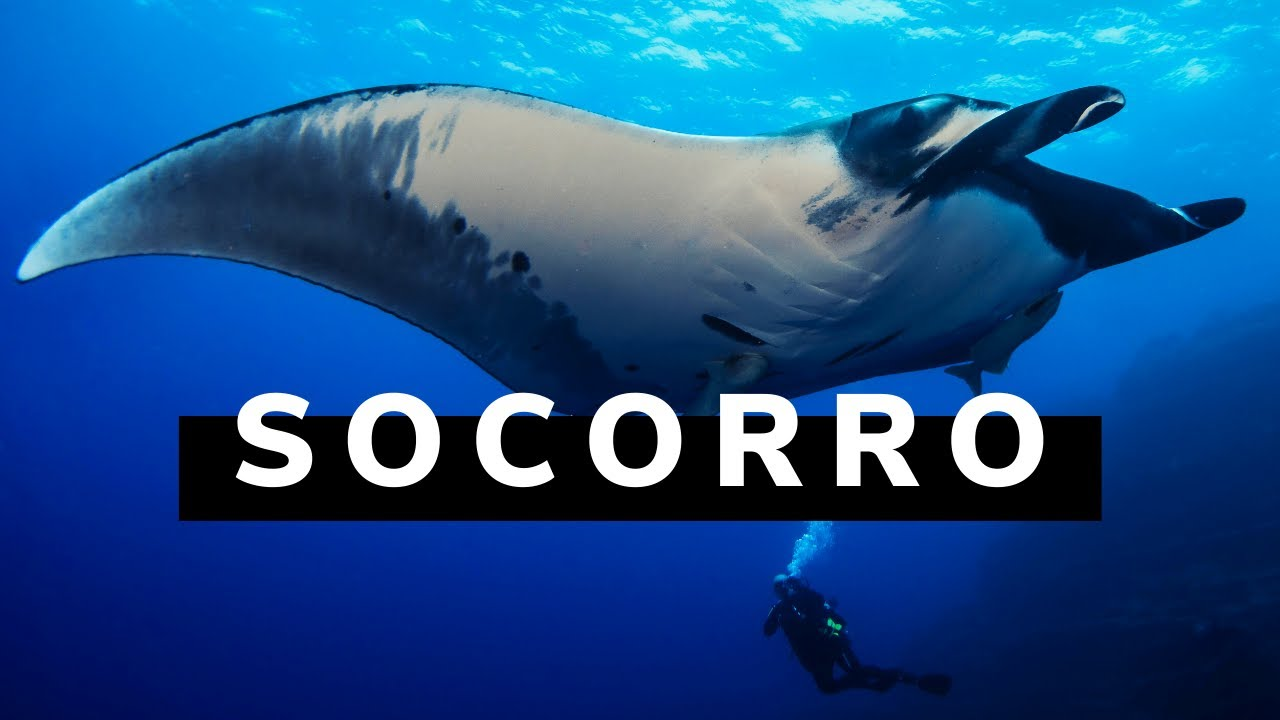 Join our Socorro Island Liveaboard Trip | Scuba Diving Blog