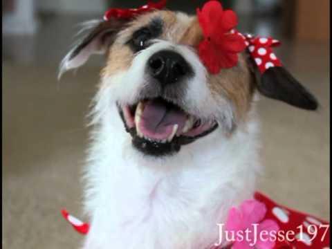 A Just Jesse Valentine's Day Surprise
