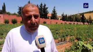 وزير الزراعة يزور أحد مصانع إنتاج البذور في محافظة المفرق - (20-8-2019)