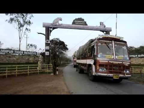 FINDING THE MIDDLE PATH - Night closure through Bandipur Tiger Reserve
